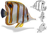 Copperband Butterflyfish Set
