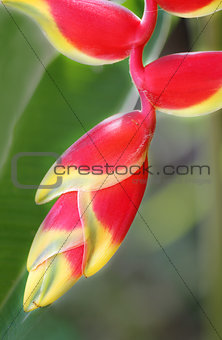 beautiful colorful tropical flower