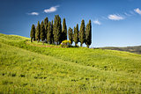 Cypress on hills, Tuscany, Italy