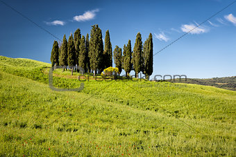 Cypress on hills, Tuscany, Italy