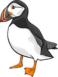 atlantic puffin cartoon illustration