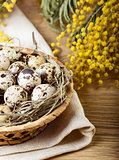 Quail eggs with mimosa branch