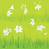lilies garden