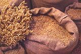 Ripe Oats and Sacks with Grain