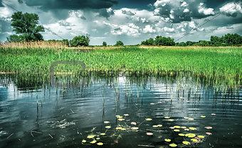 Beautiful pond landscape