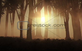 3D foggy forest