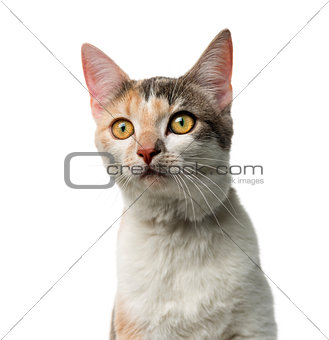Crossbreed cat in front of a white background