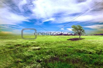 Green fields and tree landscape.