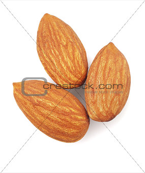 Fresh Almond Nuts