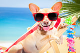 dog summer holiday vacation