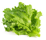Leaf fresh lettuce
