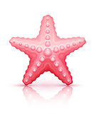 Starfish sea star isolated