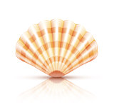 Shellfish seashell isolated
