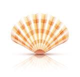 Shellfish seashell isolated