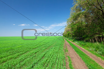 Countryside road between field and forest
