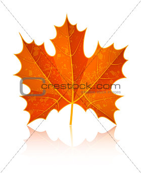 Autumn dry maple leaf