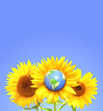 Three sunflowers and Earth on blue sky background