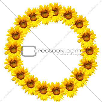 background of sunflowers