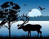 Reindeer beside lake