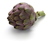 purple globe artichoke
