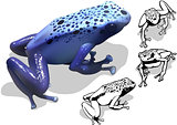Blue Poison Dart Frog Set