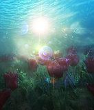 Underwater Tulips
