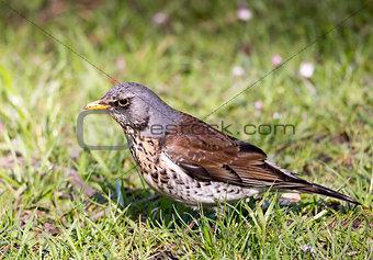 Small bird on grass