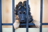Unhappy puppy behind bars in shelter