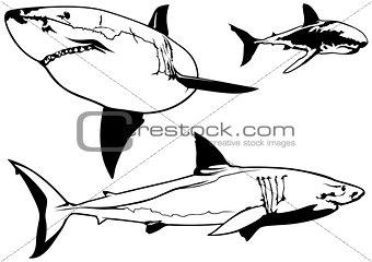 Great White Shark Set