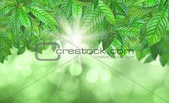 3D Leaves against a defocussed background