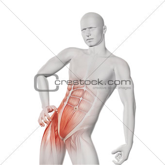 3D male medical figure with partial muscle map