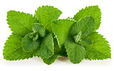 Fresh leaf mint
