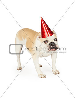 A festive looking Bulldog wearing a red party hat.