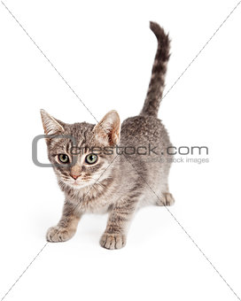Adorable Playful Tabby Kitten Ready To Pounce