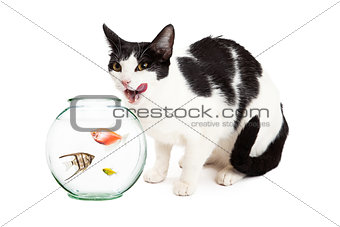 Cat Hungry For Pet Fish