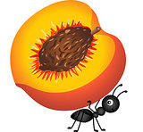 Ant carrying a peach