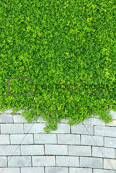 Brick wall and green leaf