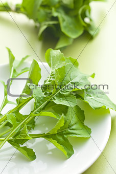 arugula leaves