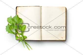 arugula leaves on old book