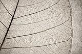 leaf cell macro