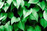 Green leaves and vegetation