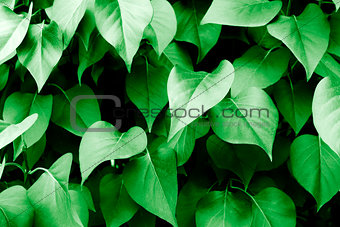 Green leaves and vegetation
