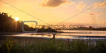 A sunset on a lake with two kangaroos
