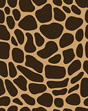 leather of giraffe 2