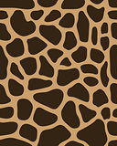 leather of giraffe