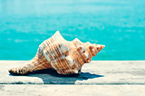 conch on an old wooden pier on the sea, with a filter effect