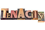 tenacity word abstract typography