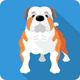 dog English Bulldog icon flat design