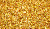 Millet grains background