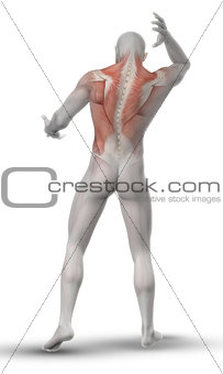 3D male figure with partial muscle map